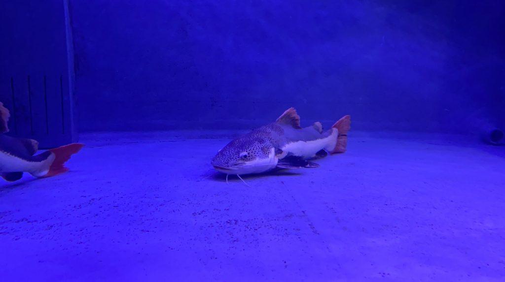 熱帯魚館の魚